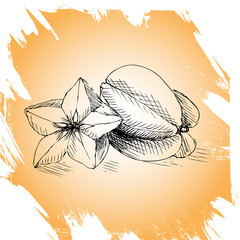 Vector background, sketch carom