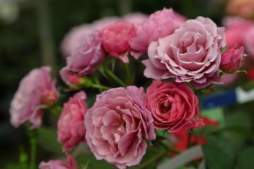 ラブローズ The roses