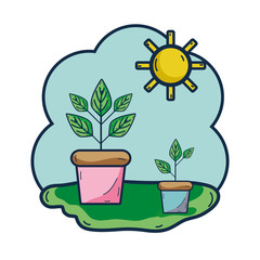plants inside of flowerpot with sunny weather