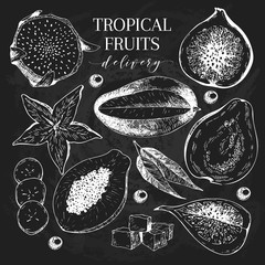 Vector hand drawn exotic fruits. Chalkboard style engraved smoothie bowl ingredients. Tropical sweet food delivery. Pitaya, carambola, mango, papaya, fig, guava.