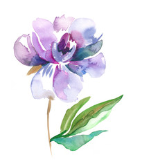 Peony Flower. Watercolor Illustration.