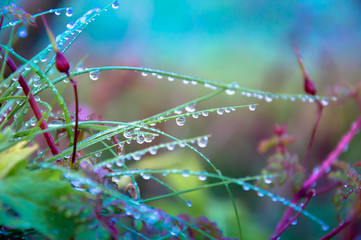 Colorful plants with rain drops and blue, green background