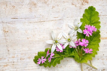 corner frame from ornithogalum and phlox subulata flowers and leaves on a wooden background with copy space