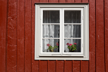 Two red geraniums in an old window with white lace curtains, on a house with an outer wall of red wooden planks