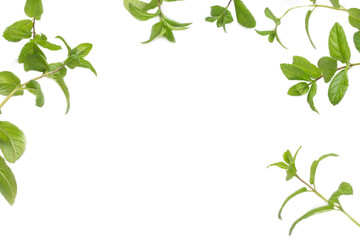 Mint sprigs on a white background