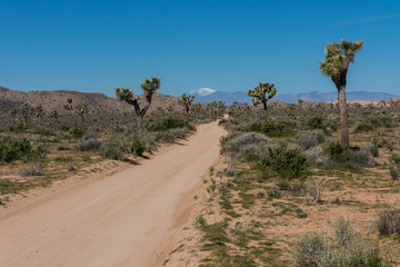 Wall Mural - Dirt Road Cuts Diagonally Across Joshua Tree