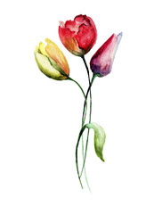 Decorative Tulips flowers