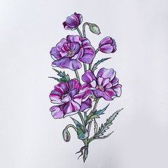 Sketch of beautiful violet flowers on a white background.