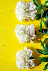 Lone beige white peony on old painted yellow wood grunge background texture for summer. Flat lay, top view with copy space