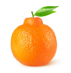 Isolated citrus fruit. One minneola tangelo with leaves isolated on white background with clipping path