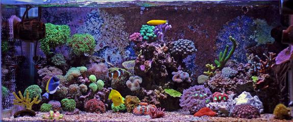 Aluminium Prints Under water Coral reef aquarium tank