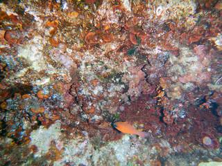 Under the sea. Reef Mediterranean.