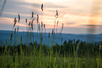 Tall Grass in front of Beautiful Sunset