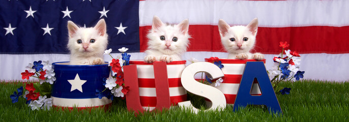 Three fluffy white small kittens sitting in patriotic designed pots on green grass, American flag in background, USA blocks in front. Banner format for social media use.