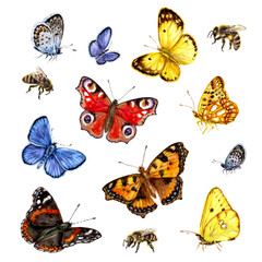 Watercolor set of butterflies and bees.