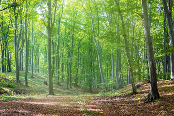 Sunbeams falling on the path in autumn forest