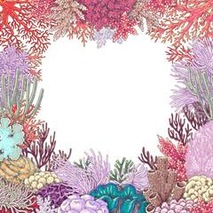 Corals Square Frame