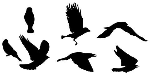 Black silhouette of bird flying