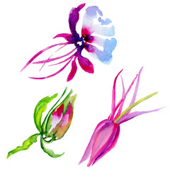 Wildflower exotic flower in a watercolor style isolated.