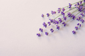 Lavender flowers for your post card. Beautiful spring lavender flower background. Lavender color....