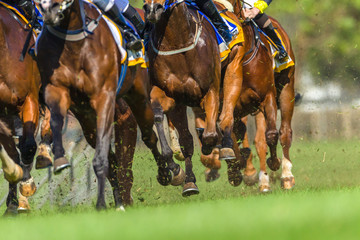 Horse Racing Closeup Animals Legs Hoofs Grass Track