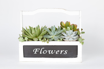 "Succulent plants arrangement in a wooden box ""flowers"""