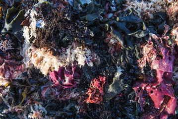 Beach detritus and seaweed