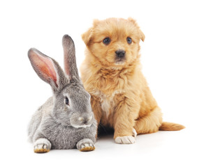 Puppy and  rabbit.