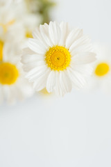Poster Madeliefjes Chamomile or camomile flowers on white background.