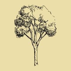 Tree sketch. Hand drawing vector illustration