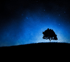 Tree silhouette againt a night sky