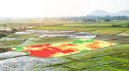 Smart agriculture , farm , precision farming concept. NIR images used to create field health maps using the normalize difference vegetation index in field rice.