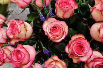 Beautiful pink roses in a bouquet of close-up