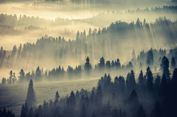 Wall Murals Morning with fog Misty mountain forest landscape in the morning, Poland