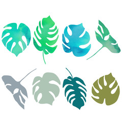 Vector monstera  palm tree leaves illustration with watercolor texture.