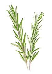 Fresh green sprigs of rosemary isolated on white background