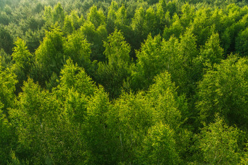 Fresh green color pattern of forest