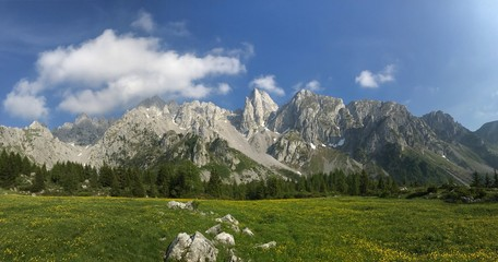 Flower meadow in front of the mountains on a sunny day - panoramic photo