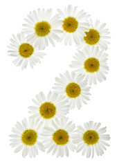 Arabic numeral 2, two, from white flowers of chamomile, isolated on white background