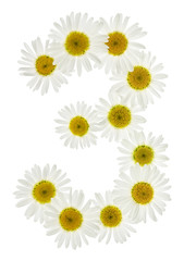 Arabic numeral 3, three, from white flowers of chamomile, isolated on white background