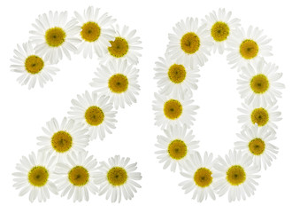 Arabic numeral 20, twenty, two, from white flowers of chamomile, isolated on white background