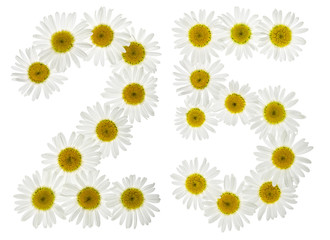 Arabic numeral 25, twenty five, from white flowers of chamomile, isolated on white background