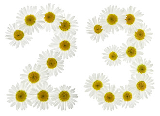 Arabic numeral 23, twenty three, from white flowers of chamomile, isolated on white background