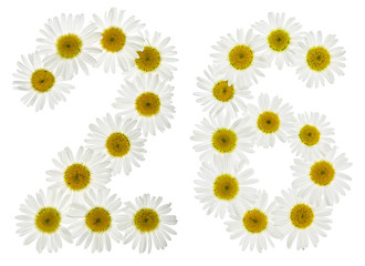 Arabic numeral 26, twenty six, from white flowers of chamomile, isolated on white background