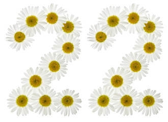 Arabic numeral 22, twenty two, from white flowers of chamomile, isolated on white background