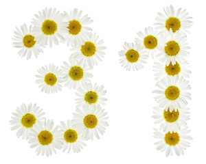 Arabic numeral 31, thirty one, from white flowers of chamomile, isolated on white background