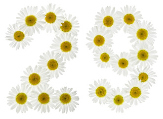 Arabic numeral 29, twenty nine, from white flowers of chamomile, isolated on white background