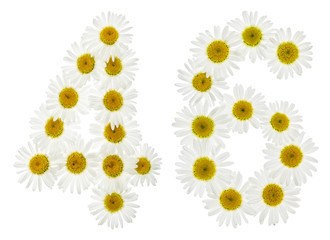 Arabic numeral 46, forty six, from white flowers of chamomile, isolated on white background