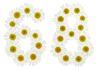 Arabic numeral 68, sixty eight, from white flowers of chamomile, isolated on white background