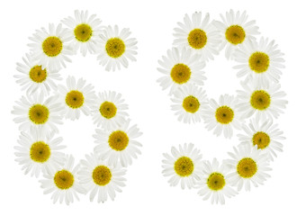 Arabic numeral 69, sixty nine, from white flowers of chamomile, isolated on white background